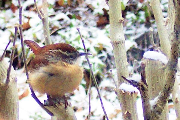 Bird Watching by dawnmichelle