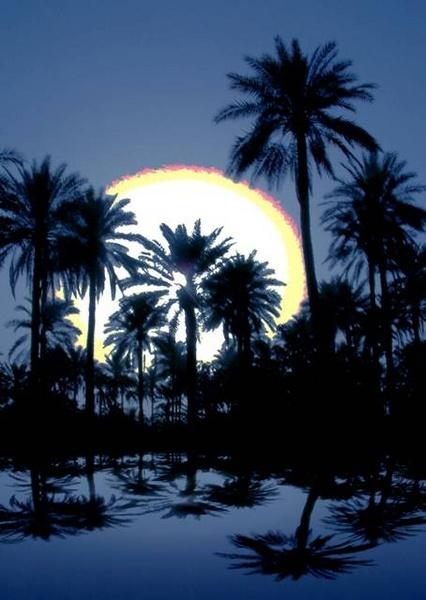 palms by raadalshawi