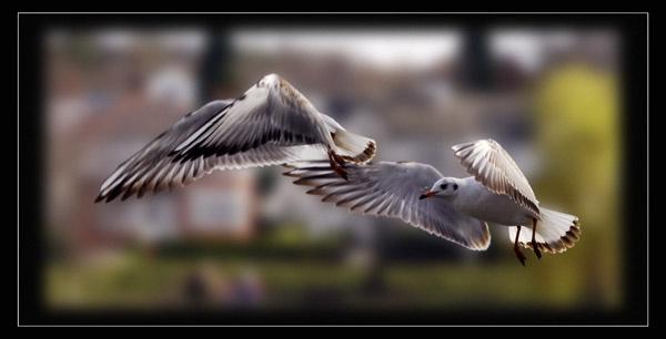 Caught in flight...mrk II by Mobieus