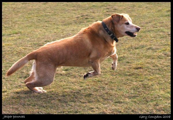 Jasper pounces by shinyredmx5