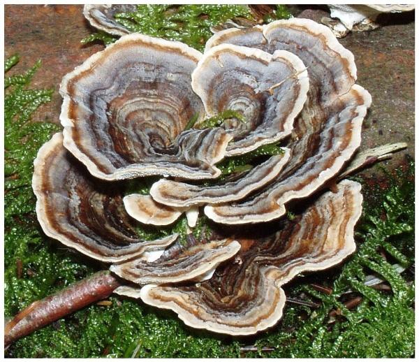 Fungus by Ukulele_Lady