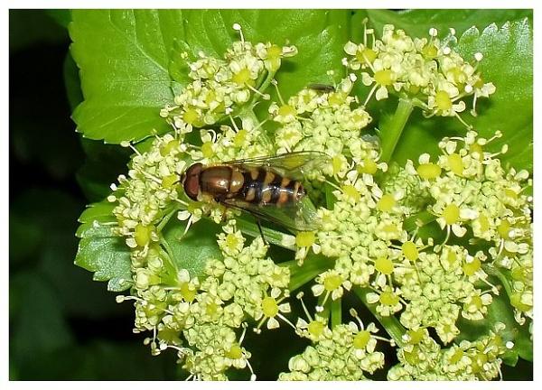 A Bug\'s Life by Ukulele_Lady