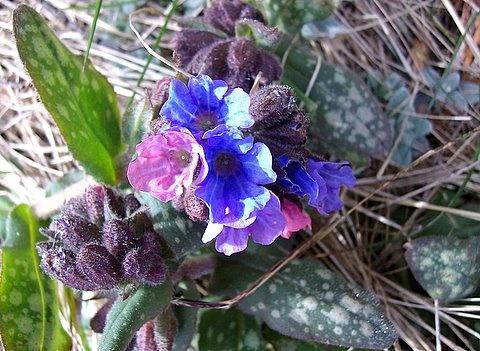 Garden Flower by jacqui123