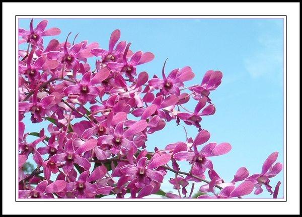 pink cascade by yelnats