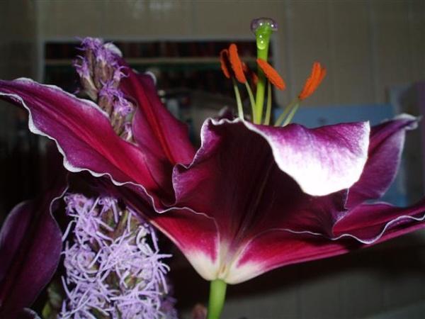 Purple flower by Vicalli