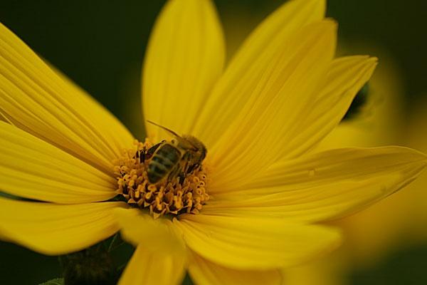 BEE by dexthersj41