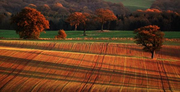 finger printed field by dannybeath