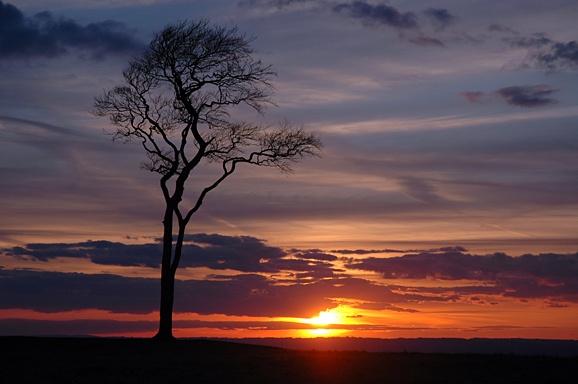 Tree at After Dark by mark_elford