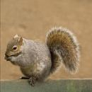 Well Balanced Squirrel
