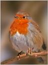 Round Robin