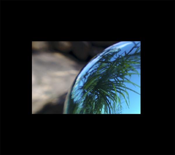palms by beriah