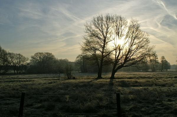 Dawn by jinstone