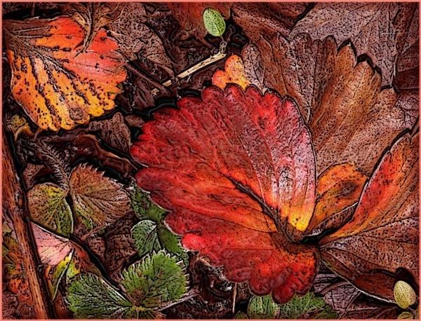 Leaf Art by SandraKay