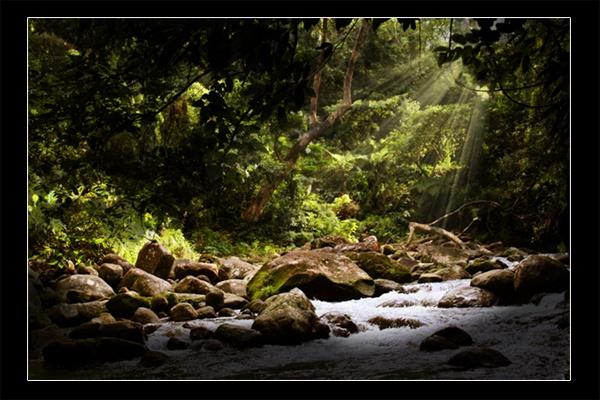 jungle by louisjp