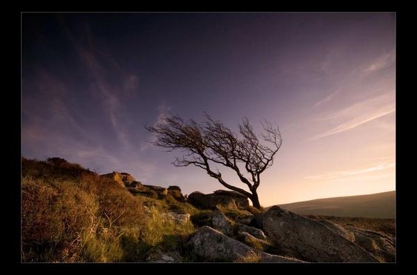 Tor Tree by tavm