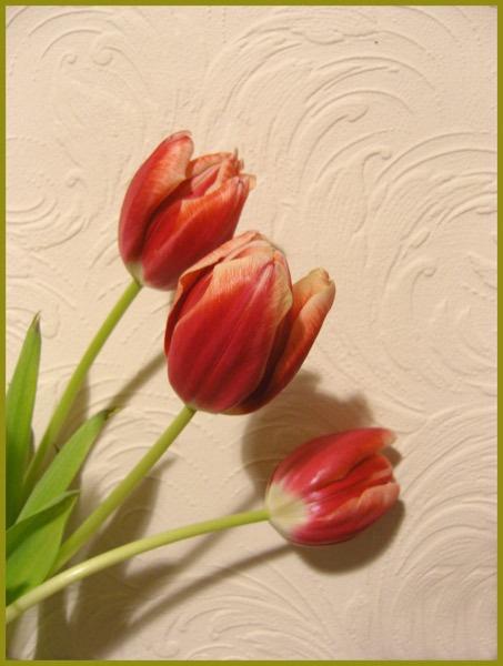Tulip spray by Barbaraj