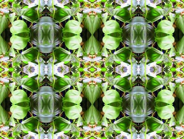 Ivy by dawnmichelle