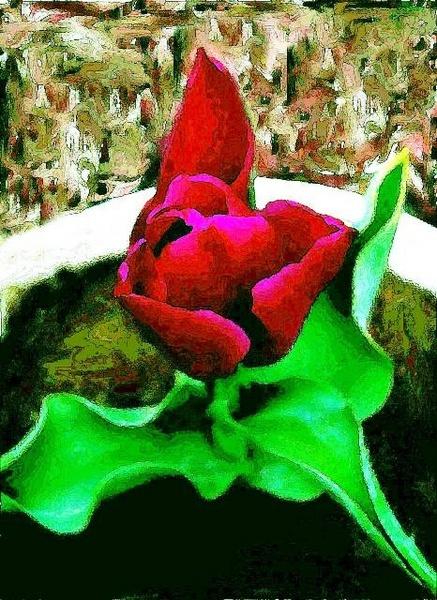 beauty by raadalshawi