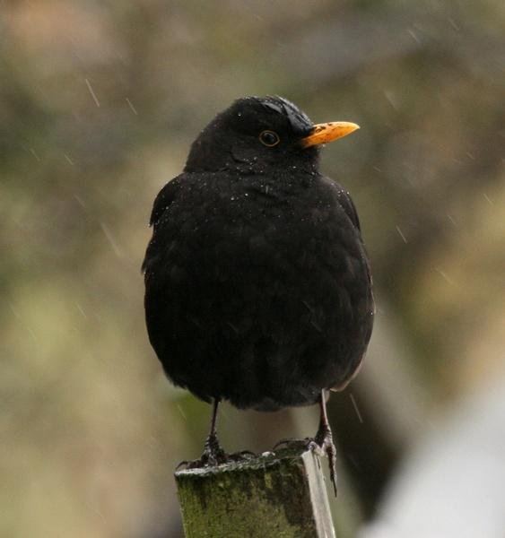 sring arrives by blacky