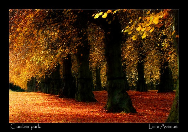 lime avenue by NEWMANP