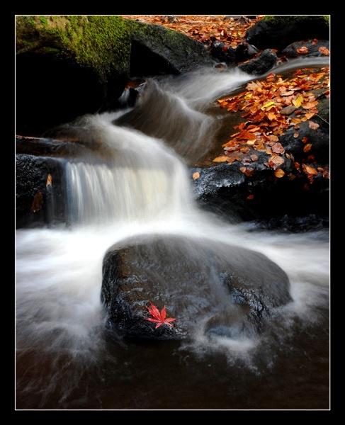 fall 2 by NEWMANP
