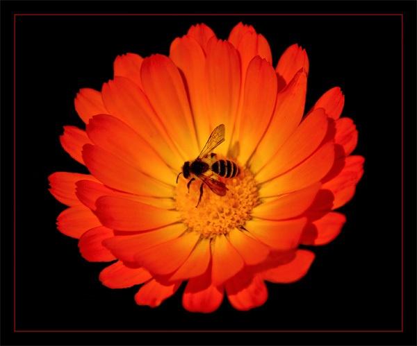 orange flower by ducatifogarty