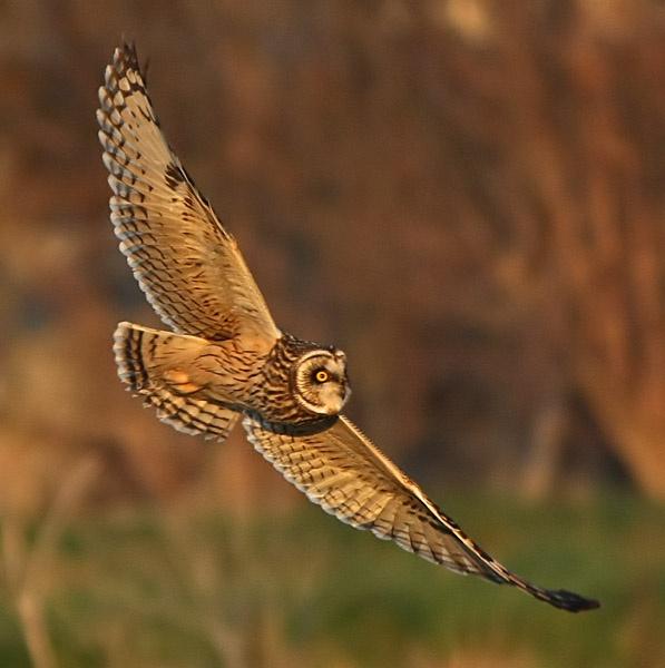 SE Owl by Jaff
