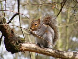 Squirrel by MikeGosden