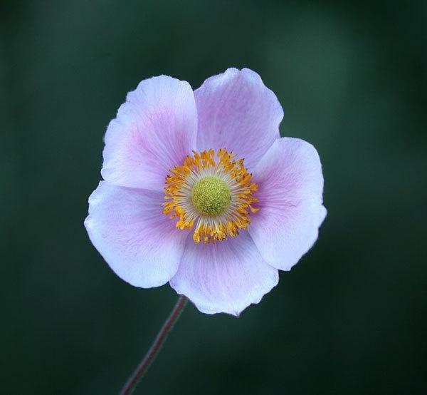 FLOWER by dexthersj41