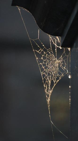 urban cobweb by dannybeath