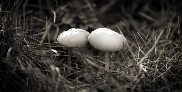 Mushrooms by DrGreen