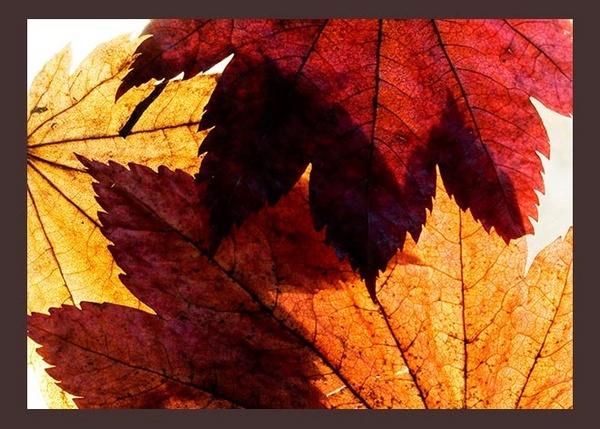 Leaves by boiledegg