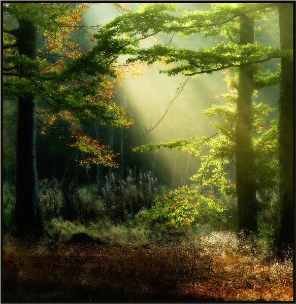 Forest Light by MalcolmM