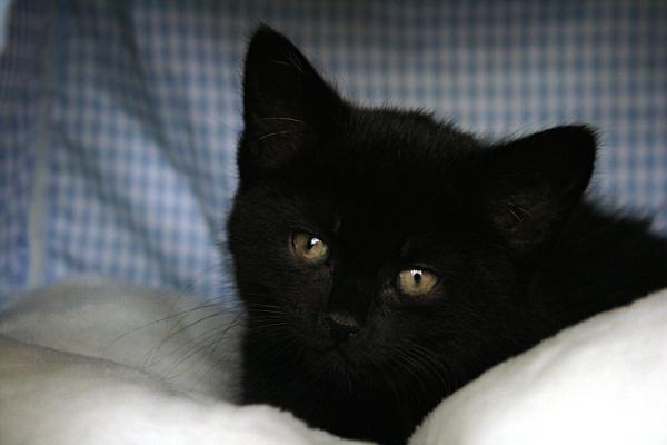 Rocky the kitten by Orrill