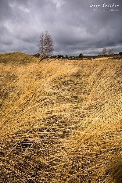 Moorland by Joop_Snijder
