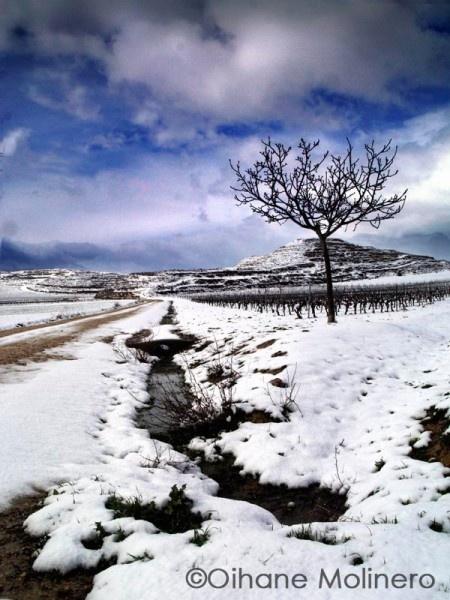 Spring by Onyria