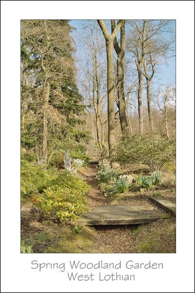 Woodland Garden by thebigA