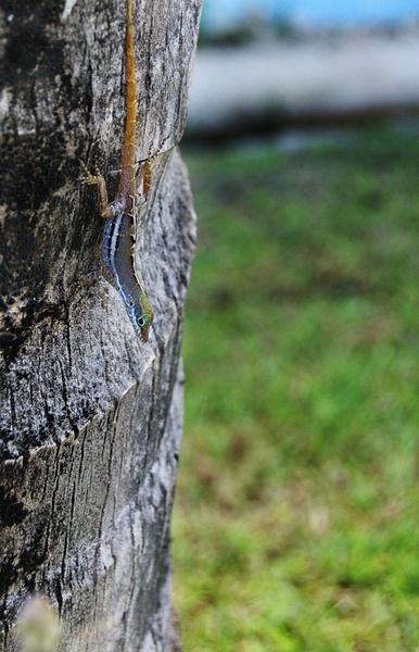 Lizard by cavjer