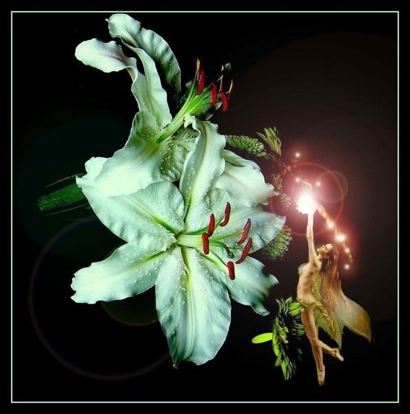A Lily Fairy by gerrymac