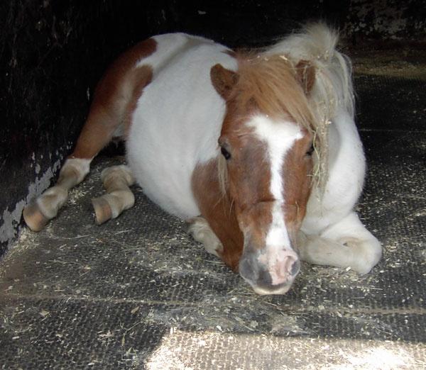 pony by ellaw