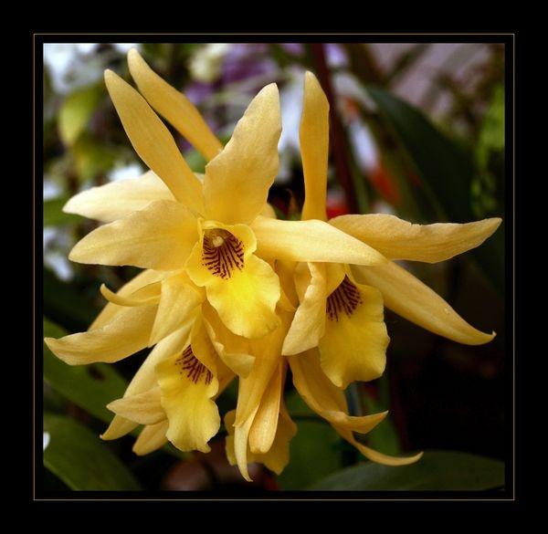mellow yellow by yelnats