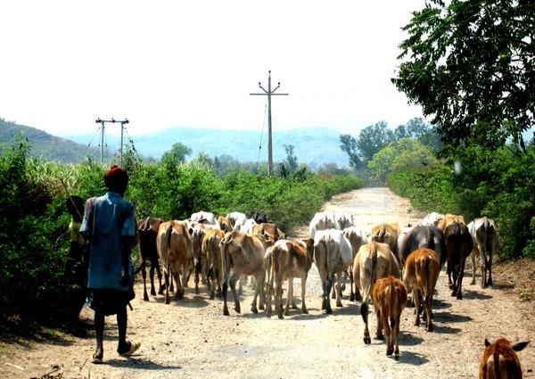 Road Block by Amal