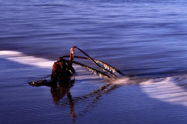 Seaweed by kgb