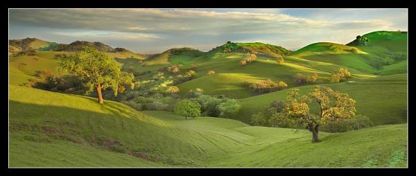 Spring Oaks by PatrickSmith