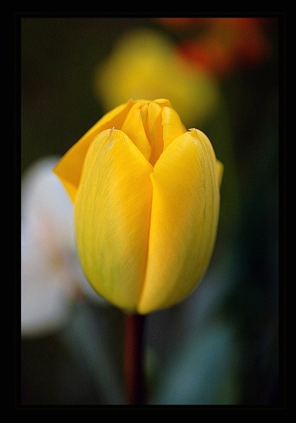 Mellow Yellow by LizzieN