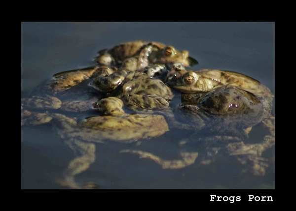 Frogs Porn by SuPlied