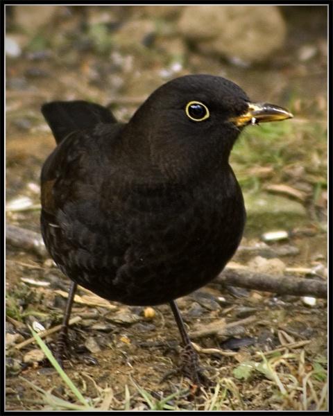 blackbird by epoxy