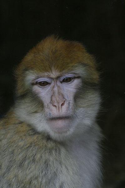 monkey by marky228
