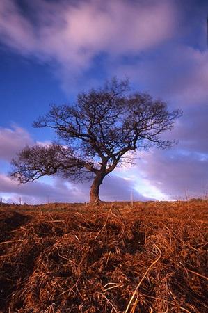 Tree by rogerwd