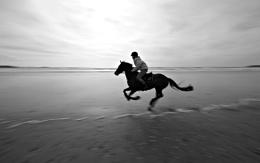 Sunday Gallop